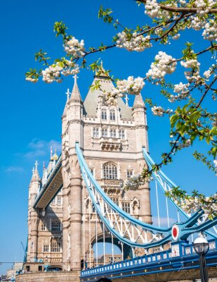 Adesivo Famous landmark of London Tower Bridge in spring season with white apple tree flowers in composition - England, United Kingdom