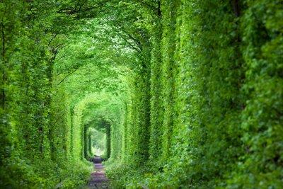 Adesivo Fantastica Tunnel reale di amore, alberi verdi e la ferrovia