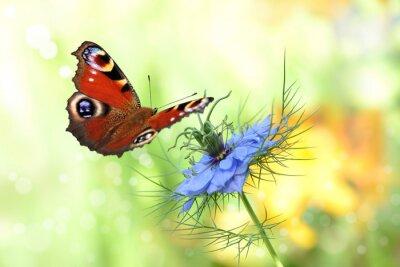 Adesivo farfalla 198
