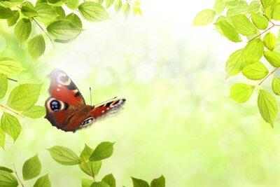 Adesivo farfalla 204