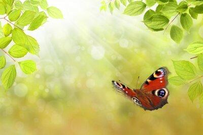 Adesivo farfalla 206