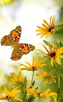 Adesivo farfalla e fiori nel giardino primo piano