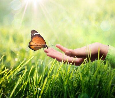 Adesivo farfalla in mano sull'erba