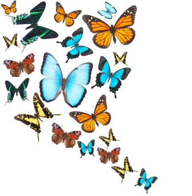 Adesivo farfalle tropicali impostate