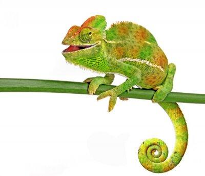 Adesivo felice camaleonte