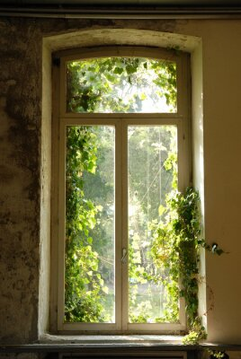 Adesivo finestra