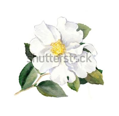 Adesivo Fiore bianco. Illustrazione botanica dell'acquerello