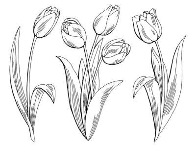 Adesivo fiore del tulipano grafico nero bianco isolato schizzo illustrazione vettoriale