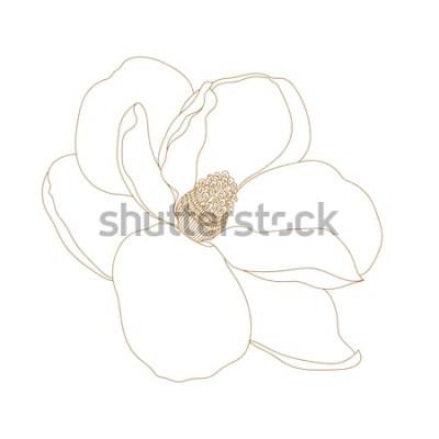 Adesivo Fiore della magnolia, vista superiore, isolato su bianco Fiori disegnati a mano magnetici della magnolia. Vector.Magnolia fiore disegno e schizzo con line art in bianco e nero.