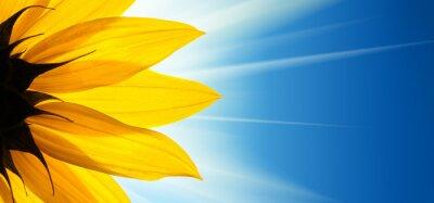 Adesivo Fiore di girasole sole su sfondo blu cielo