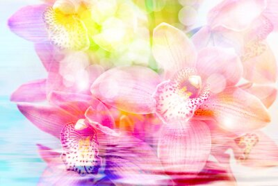 Adesivo fiore di orchidea da vicino