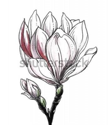 Adesivo Fiore tropicale del fiore della magnolia bianca su fondo bianco. Illustrazione monocromatica in bianco e nero botanica dell'acquerello disegnato a mano per la stampa di nozze, carta, invito. Stile