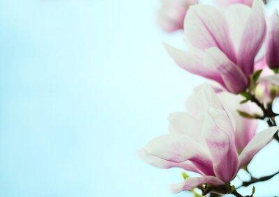 Adesivo fiori di magnolia su uno sfondo di cielo blu