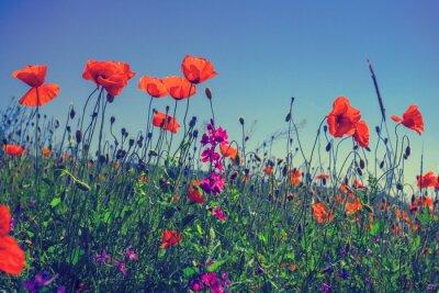 Adesivo fiori di papaveri contro il cielo