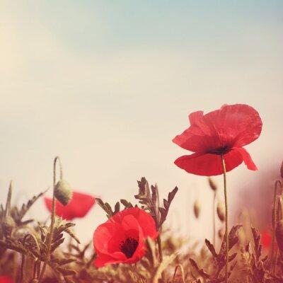Adesivo fiori di papavero immagine Retro stilizzato
