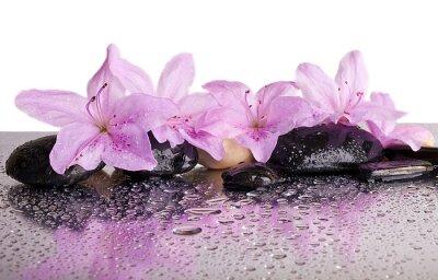 Adesivo fiori e pietre nere con la riflessione