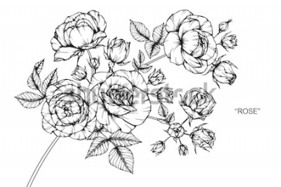 Adesivo Fiori rosa disegno e schizzo con line art su sfondi bianchi.