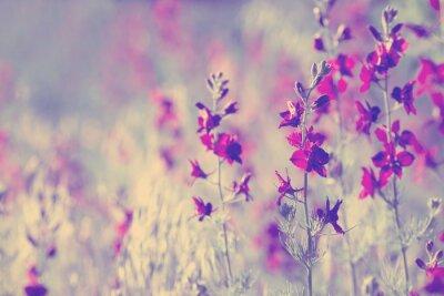 Adesivo fiori viola