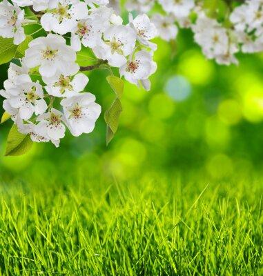 Adesivo fioritura primaverile ed erba