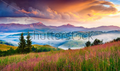 Adesivo Foggy summer sunrise in the Carpathian mountains. Colorful morning scene in the mountain valley. Beauty of nature concept background. Artistic style post processed photo.