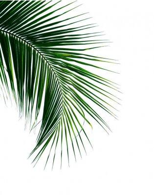 Adesivo foglia tropicale del cocco isolata su fondo bianco