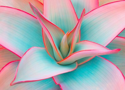 Adesivo foglie di agave in colori pastello alla moda per gli sfondi di design