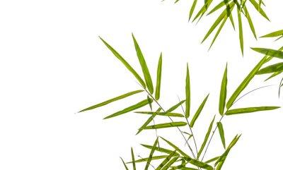 Adesivo foglie di bambù isolato su sfondo bianco, la saturazione percorso compresi