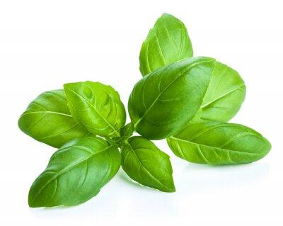 Adesivo foglie di basilico isolato