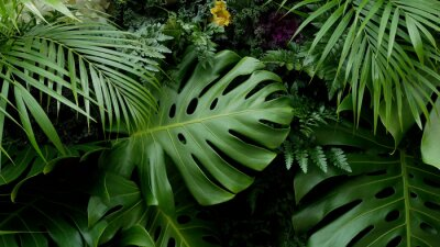 Adesivo Foglie tropicali verdi Fondo del fondo di Monstera, della palma, della felce e delle piante ornamentali