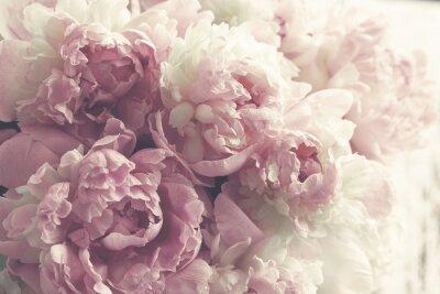 Adesivo Fondo rosa lanuginoso dei fiori delle peonie