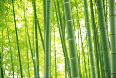 Adesivo foresta di bamboo
