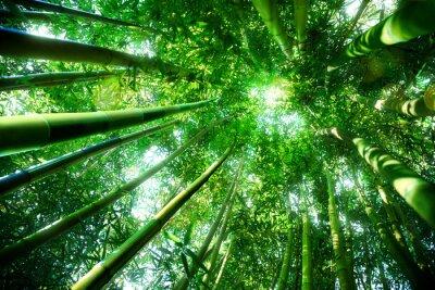 Adesivo foresta di bambù - concetto zen