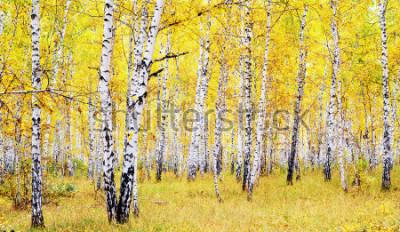 Adesivo foresta di betulle d'autunno