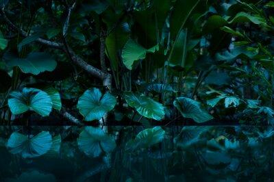 Adesivo foresta pluviale tropicale con specchio d'acqua