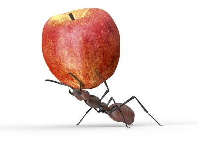 Adesivo formica sta alzando una mela isolato su un bianco