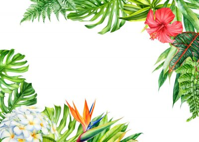 Adesivo frame, tropical leaves and flowers on an isolated background, greeting cards with space for text, watercolor painting,  floral design, plumeria, strelitzia, palms, monstera, ficus