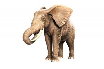Adesivo Freigestellter Elefant sono Fressen (gerendertes Bild)