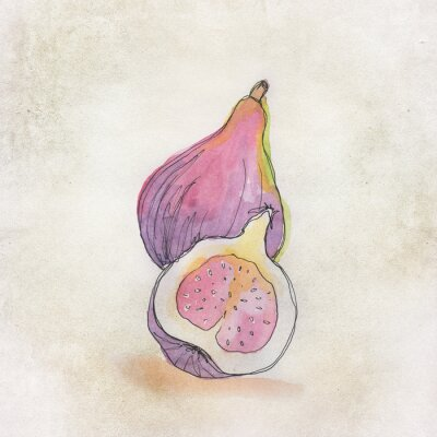 Adesivo Fruit illustration with watercolor