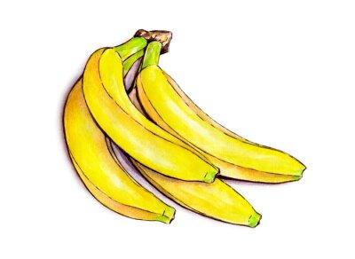 Adesivo Frutta tropicale