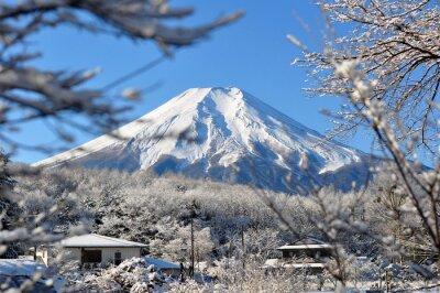 Adesivo Fuji