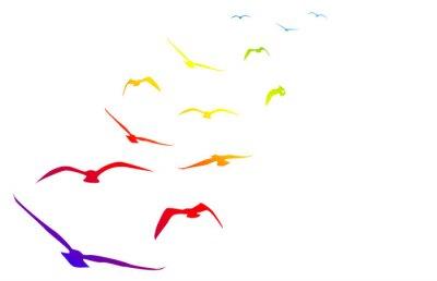 Adesivo Gabbiani, volare, volo, arcobaleno, il passo
