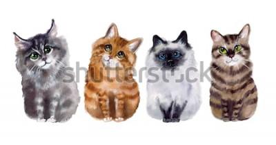Adesivo Gatti divertenti svegli dell'acquerello sui precedenti bianchi