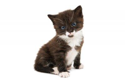 Adesivo gattino bianco e nero isolato