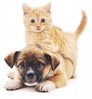 Adesivo gattino Rred in cucciolo.