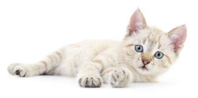 Adesivo Gattino su uno sfondo bianco