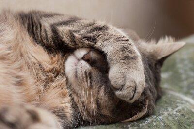 Adesivo gatto addormentato