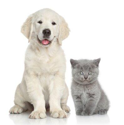 Adesivo Gatto e cane insieme