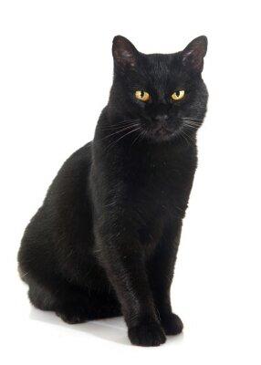 Adesivo gatto nero