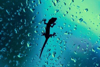 Adesivo Gecko sul vetro della finestra bagnato con gocce di pioggia