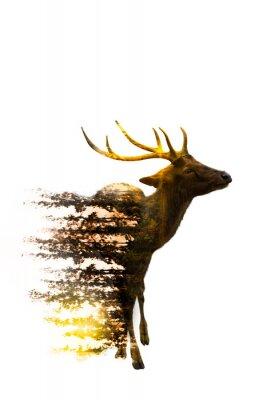 Adesivo Giornata mondiale della fauna selvatica Concetti ambientali e della fauna selvatica